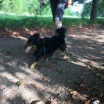 Petit chien à poils longs en excursion avec son maître