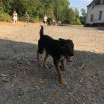 Jeune chien se promenant avec ses maîtres