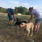 Les maîtres donnent de l'eau à leurs chiens