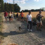 Beagle, Boston-terrier et Border-collie devant un Bull-terrier