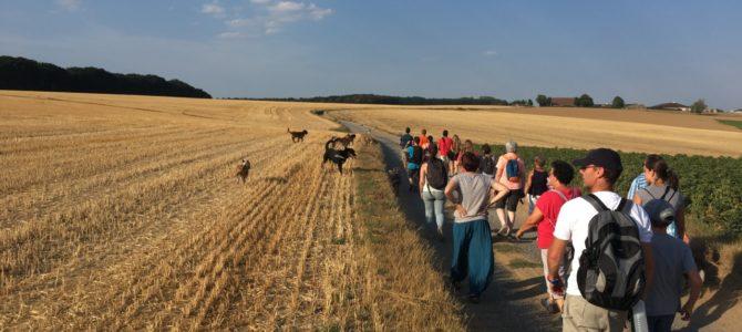 Les photos de notre balade canine du 6 août en soirée..