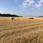 Joyeuse course canine dans les champs