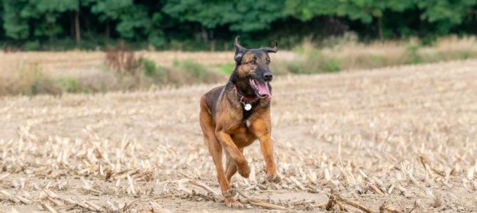 Les photos de notre balade canine du 25 août dans le Bois du Bercuit