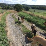 Grand groupe de chiens en balade