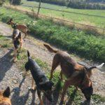 Rencontre entre chiens de plusieurs races