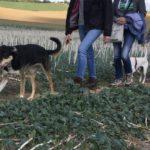 Maîtres et chiens en file indienne