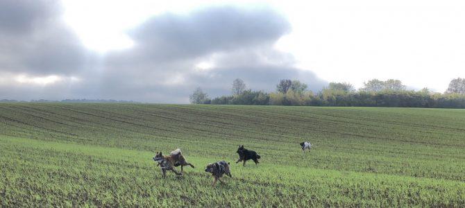 Notre première balade canine du 27 octobre à Dion-le-Mont