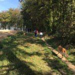 Malinois sur un chemin bordant les arbres