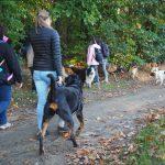 Rottweiler accompagné d'un épagneul et de bergers