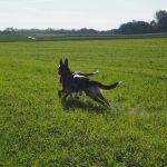 Deux chiens qui jouent dans de vastes champs