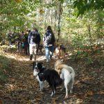Border-collie et Labrador dans une forêt