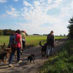 Ensemble de chiens et de maîtres en balade