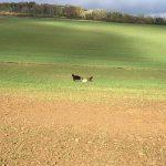 Trois chiens jouent ensemble dans un vaste champ