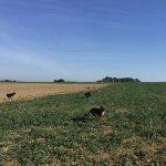 Ensemble de chiens qui courent dans les champs