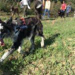 Border Collie, Labrador, Rottweiler et Malinois dans une prairie