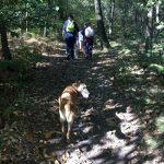 Berger belge qui se promène dans la forêt