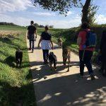 Promenade canine sous le soleil et le ciel bleu