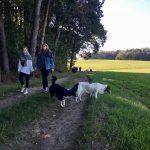 Border-collie et Epagneul de Perdrix qui regardent les champs