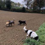 Un Rottweiler, un Epagneul, un Malinois et un Border-collie