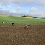 Trois chiens courant au milieu d'un champ