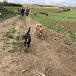 Deux petits chiens lors d'une balade canine matinale
