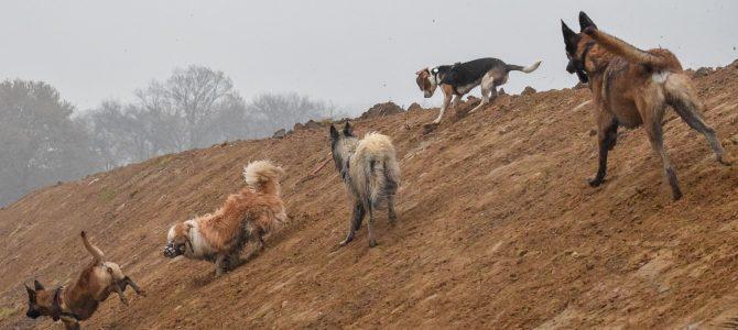 Les superbes photos de notre première balade canine du 24 novembre 2018