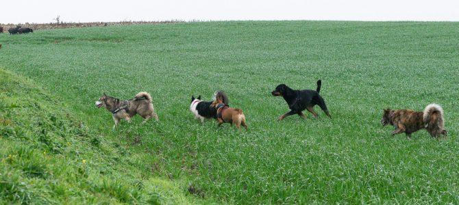 Les photos de notre deuxième balade canine de ce samedi 24 novembre