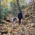 Groupe de chiens en forêt