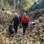 Border-collie et Bergers dans les bois