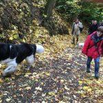 Terre-Neuve et Jack Russel Terrier