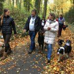 Border-collie et Rottweiler qui se baladent avec d'autres chiens