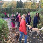 Chiot Sheltie entouré d'autres chiens