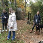Rottweiler, Jack Russel et un Husky