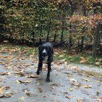 Joli chien noir taché de blanc