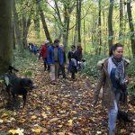 Rottweiler et Border-collie en forêt
