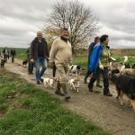 2 chiens Jack Russel, deux chiens Berger allemand et un Braque de weimar