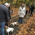 Deux Jacks, un Berger australien et un Rottweiler en forêt
