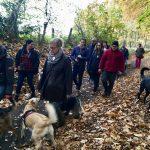 Rottweiler et chiens de berger