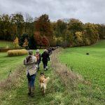 Balade canine le long de jardins et prairies