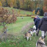 Beagle, Husky et Berger allemand reniflant les odeurs