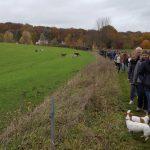 Deux Jacks sur un sentier et un groupe de chiens dans une prairie
