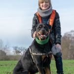 Rottweiler qui pose