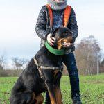 Affection envers le Rottweiler
