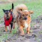 Deux chiens qui se baladent