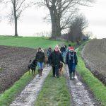 Rottweiler et Berger allemand lors d'une promenade