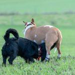 Rencontre entre deux chiens