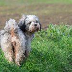 Petit chien mouillé