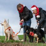 BBS, chiens de berger et leur maîtresses