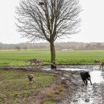 Chien loup dans les chemins de campagne