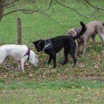 trois chiens qui sniffent les alentours